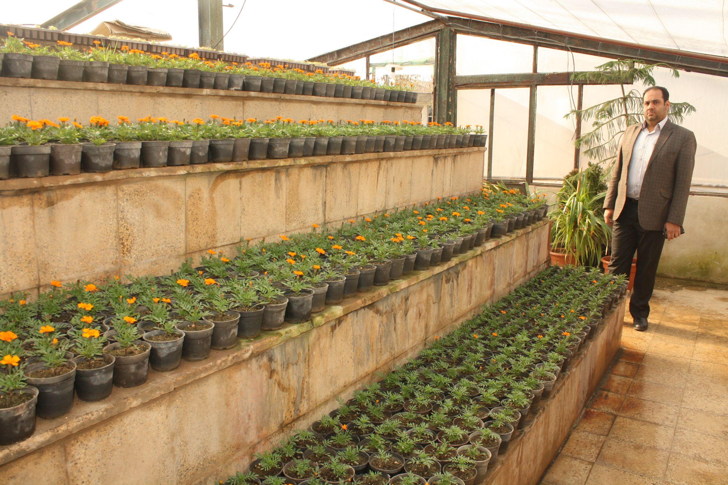 خودکفایی شهرداری ورامین در تولید گل و گیاه به روایت تصویر